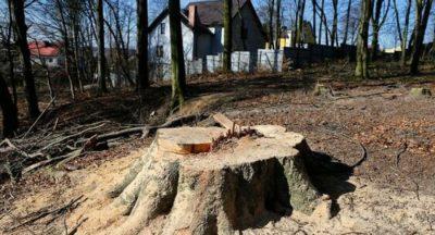 Разрешение на вырубку деревьев при строительстве