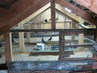 Строительство голубятни своими руками